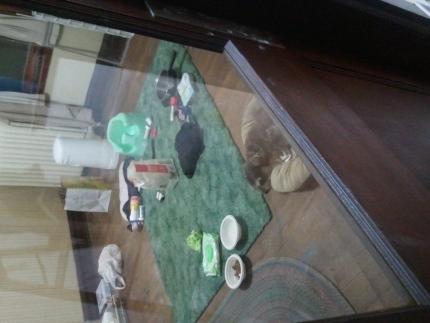 Bean sleeping in dining room