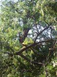 More (tree carnage)