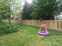 South side of fence (Olive's tiny pool)