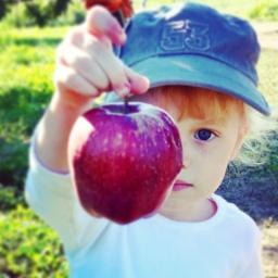 U pick it, apples